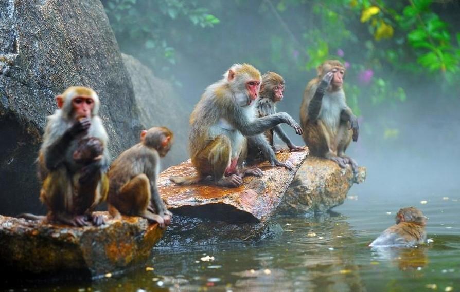 Заповедник «Обезьяний остров» (г. Санья), Китай