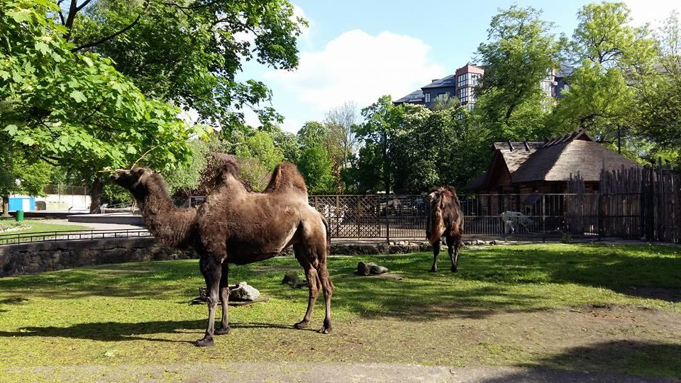 Зоопарк, Калининград