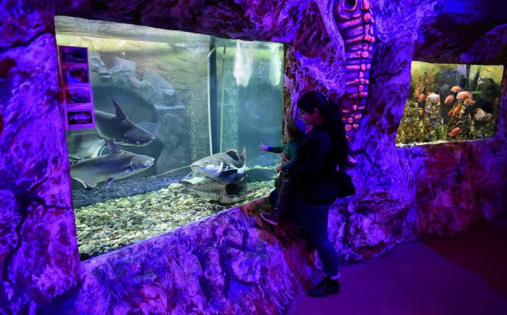 Евпаторийский аквариум, Евпатория