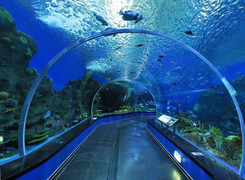 Приморский океанариум, Владивосток