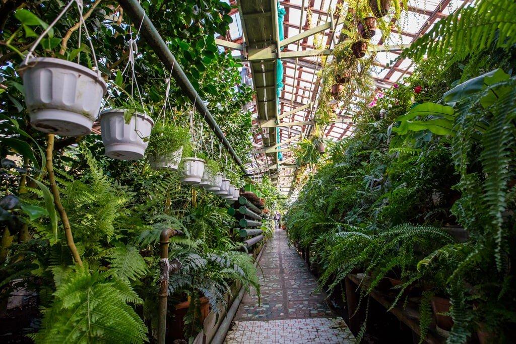 Ботанический сад-институт ДВО РАН, Владивосток