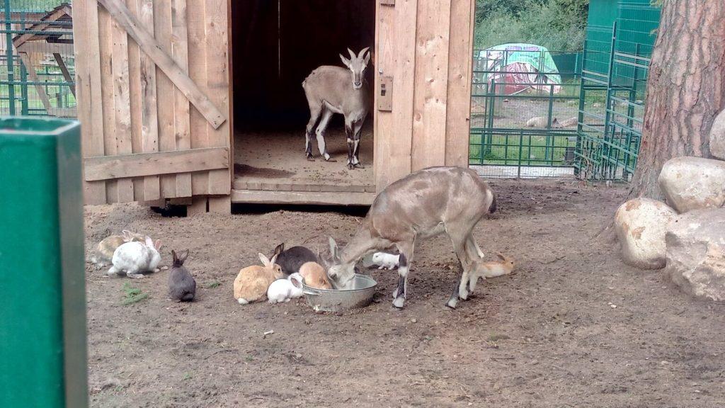 Костромской зоопарк, Кострома