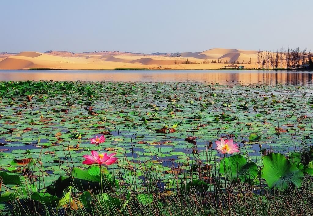 Озеро лотосов, Муйне